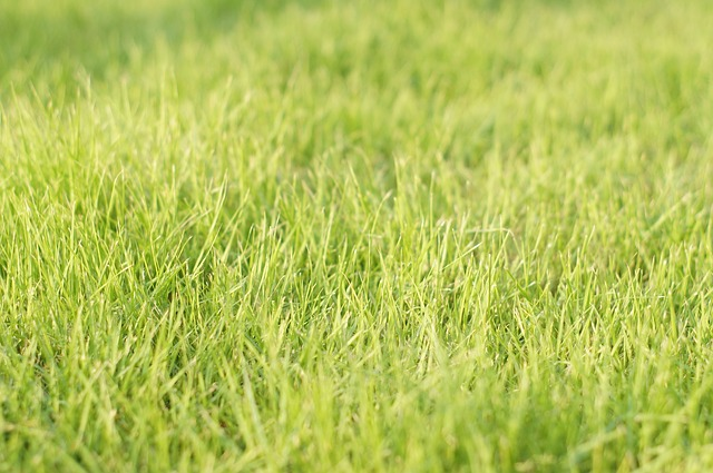Spring care for your lawn