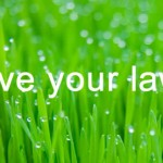 Help with lawn problems  – Weeds, Moss & Fungi Problems