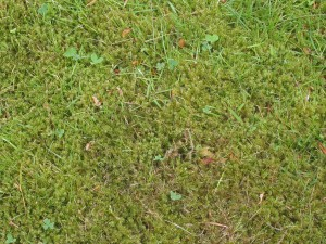 Spring Jobs: Aerating and Scarifying Advice & Tips