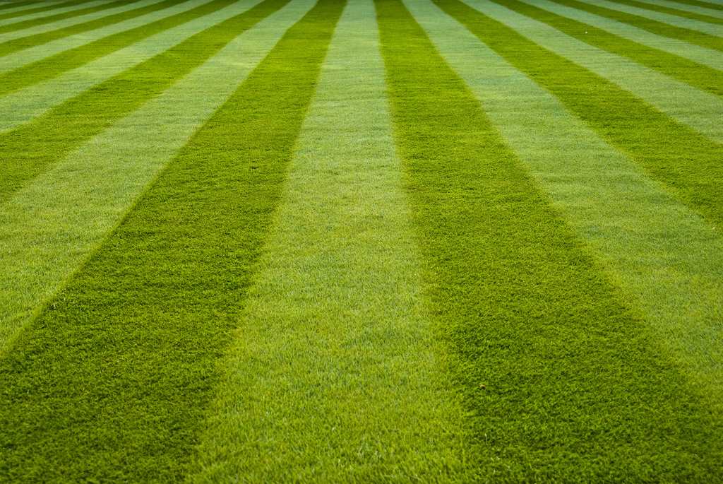 Achieve Your Very Own Wimbledon Standard Lawn