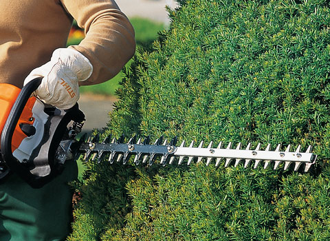 Handy Hedge Trimming Tips