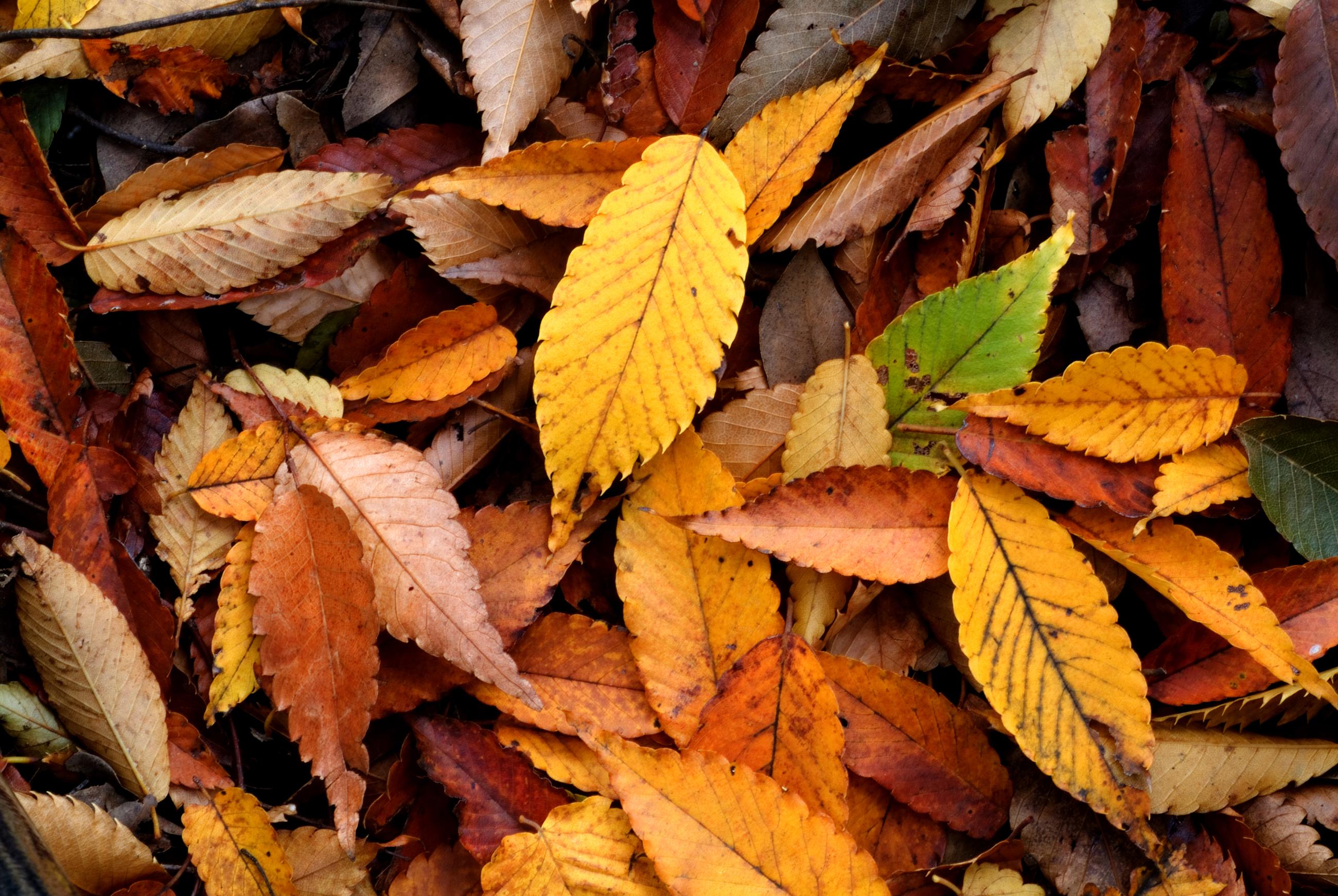 Your October Gardening Checklist