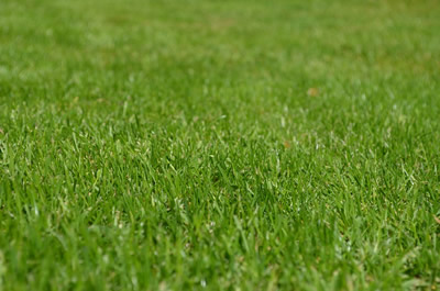 How to sow a lawn from seed